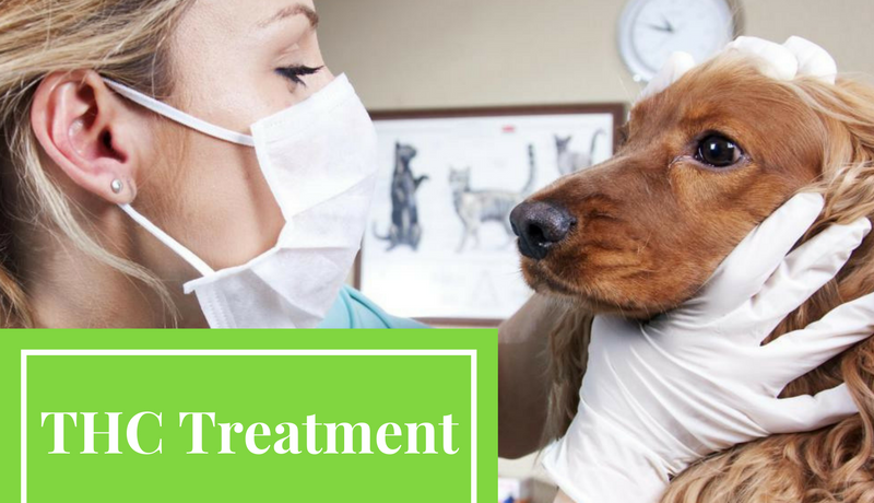 CBD And Canine Treatment