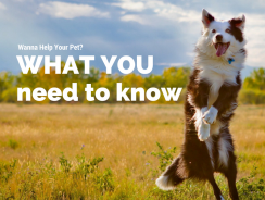 Can CBD Help Your Pet?