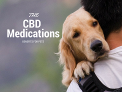 Canine Health – Treating Seizures With Cannabis